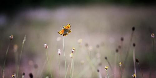 Die Raupe trägt in sich den Schmetterling– Morgenandacht